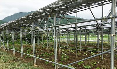 営農型太陽光